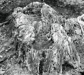 Fynd vid utgrävningen av Skedemosse.