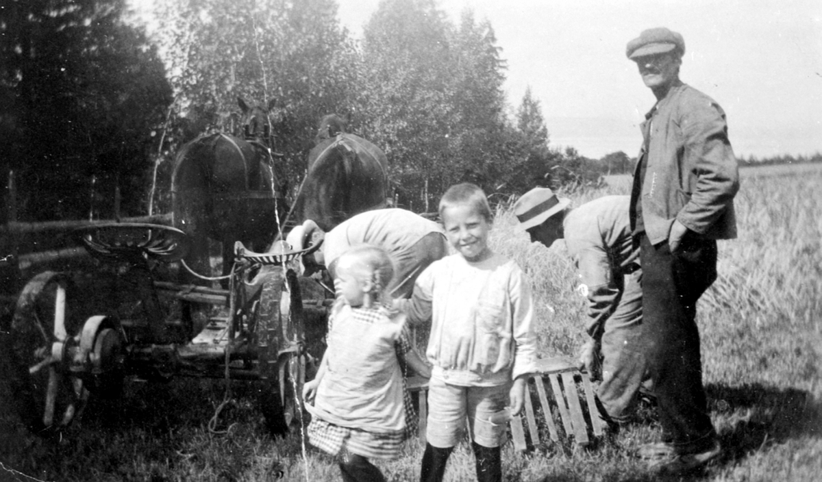 Skuronn på Skavang, Helgøya. Hest med slåmaskin. Hans Moen ved slåmaskina. Hans Martinsen Moen f.1894 ved avleggerbrettet. Barna er Ole Magnus Moen f.1916 og Anne Moen f.1918. (Foto/Photo)