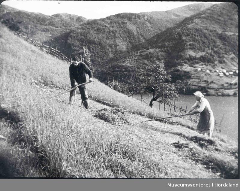Havrå. Mann sler med langorv og dame som rakar. Bratte bakkar. Ei hesje og eit gjerde. Fjord. Bygd på andre sida av fjorden. Fjell. Høsspentmaster.  (Foto/Photo)