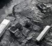 En arkeologisk utgrävning vid Skedemosse.