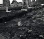 Fynd från Skedemosse 1961, ett kranium.