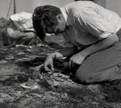 Utgrävning vid Skedemosse 1961.
