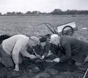 Utgrävning vid Skedemosse med Ulf Erik Hagberg.