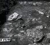 En arkeologisk utgrävning vid Skedemosse 31/5 1960.
