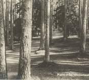 Vykort från Nybro med motiv från Viktoriaskogen, nuvarande Joelskogen.