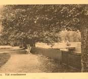 Vid Svandammen i Nybro.