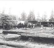 Arbetare och hästar bland stock och bräder på ett sågverk i Hjorted.