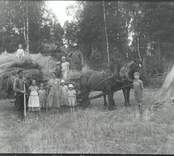 Algot med familj kör in råg 1935.