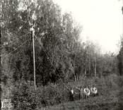 Arbete med dragning av telefonledning 1911.