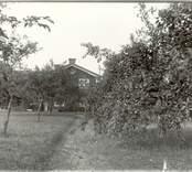 August Svenssons gård med fruktträdgård i Getterum.
