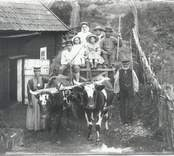 Hökörning vid Hvilan i Falsterbo.
