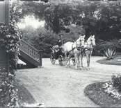 Landå med kusk och vita parhästar i Falsterbo, tidigt 1900-tal.