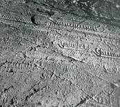 I Utvike framkom 1933 en ristning med 12, eventuellt 13 skepp. Ytan är vittrad och skeppen svåra att urskilja.