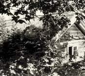 Småland Döderhult socken Högatorp 1:3  Foto: Lotte Fürst  Hösten 1988