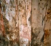 Detalj av det avtäckta innertaket i sakristian i Kristdala kyrka.