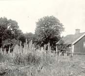 Osmins stuga på 1920-talet.