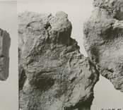 Arkeologiskt fynd från Vinäs.