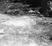 Hällristningar, bestående av fyra par fotsulor, tre enkla sådana och några ofullbordade, samt skålgropar. Jämför Tjustbygden, 1966, sidan 10 och 21.