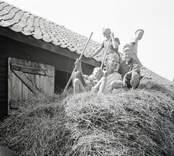 Familj Thore Johansson i hölasset. Foto: 12/07 1948.