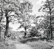 Skog i Döderhult.