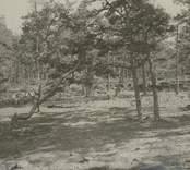Landskap på Runnö.