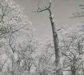 Skog utanför Vinäs Herrgård.