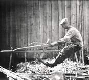 En man klyver vidjor till en gärdesgård, i Mjöshult.