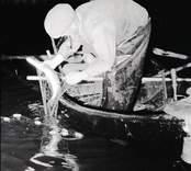 Nattfiske: Nätfiske efter gädda.