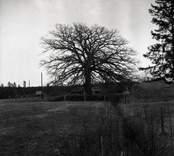 Utsikt över gårdens ägor med en stor ek i bakgrund vid Dröppshults gård.