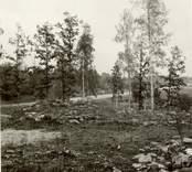 Småland Gamleby Ullevi  Stensättningar, fornlämning 29 (före årlig markstädning).  Foto: KH Arnell, oktober 1975.