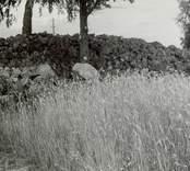 En fornlämning, röse vid ett odlingslandskap i Dvärgstad.