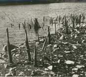 Fynd av rester av fiskeanordning vid lågvattnet sommaren 1959.