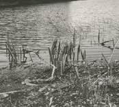 Fynd av rester av fiskeanordning vid lågvattnet somm. 1959.