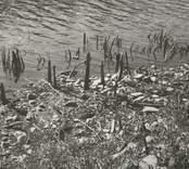 Fynd av rest av fiskeanläggning vid lågvatten i Rismåla göl.