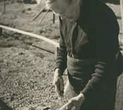 Kvinna rensar fisk på Runnö.