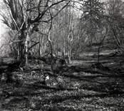 Landskapsbild ifrån Lilla Fighult.