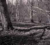 Träd och en å i Lilla Fighult.