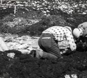 Från utgrävningarna vid Skedemosse.