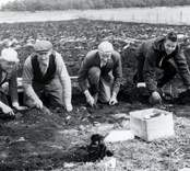 Ulf Erik Hagberg (längst till höger) vid utgrävningarna i Skedemosse.