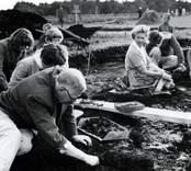 Kung Gustaf VI Adolf, som var en kunnig amatörarkeolog, deltog vid utgrävningarna av Skedemosse.