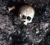 Kranium som påträffades vid utgrävningarna av Skedemosse.