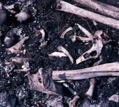 Människoben som påträffades vid utgrävningarna av Skedemosse.