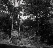 Helgerum, gamlegården byggd 1919-1920 sedd genom skogen.