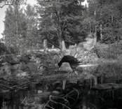 En stenvalvsbro vid Mjösjön, sedd från nya landsvägen.
