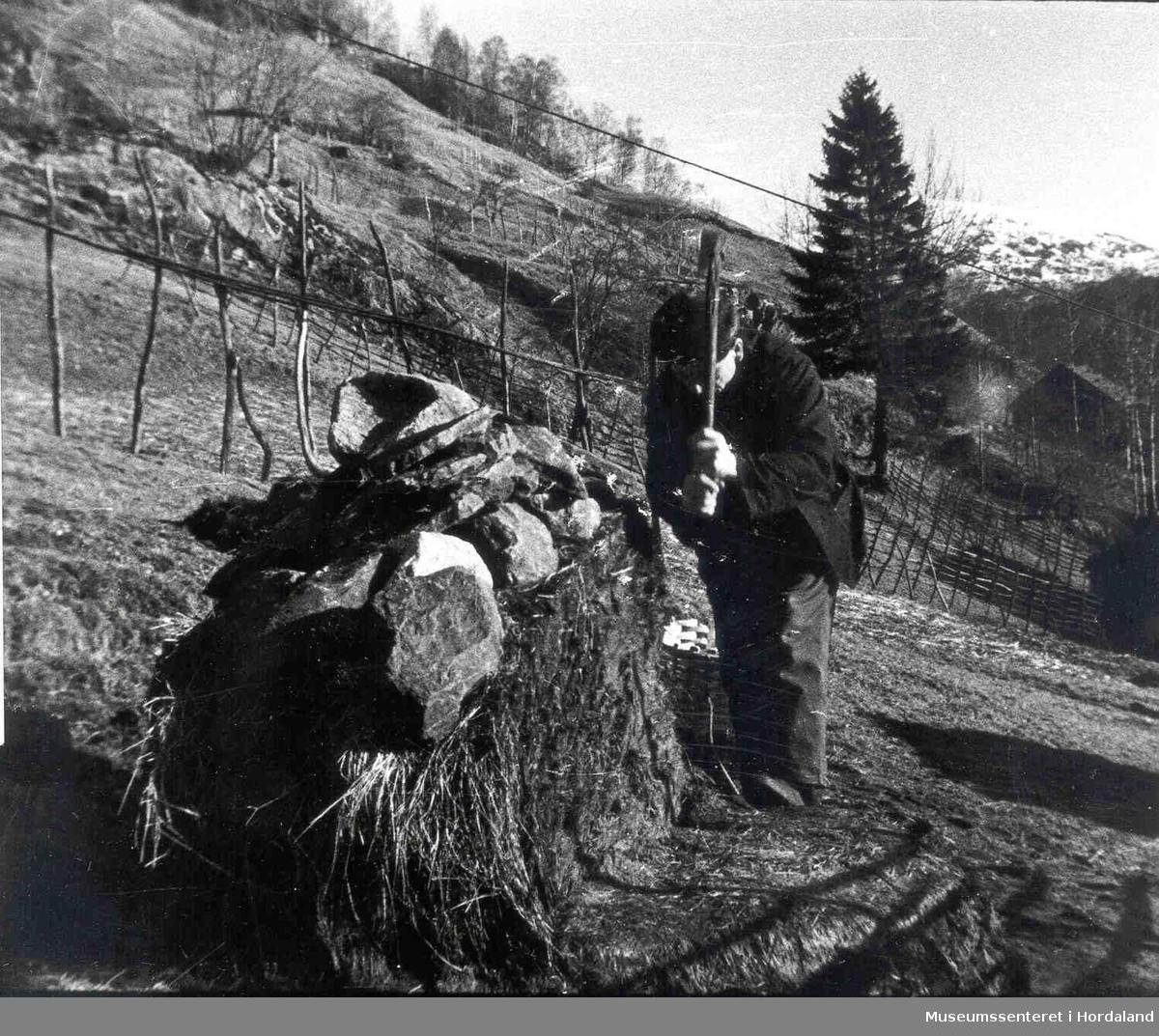 Havrå. Mann som høgg for frå håstakken.Håstakk med stein på. Bratte lier. Hesjer. Fjell med snø i bakgrunnen.  (Foto/Photo)